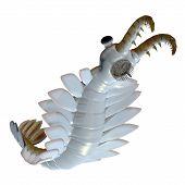 Cambrian Anomalocaris Underside