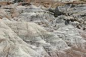Arid Petrified Forest Of Arizona
