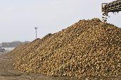 Beetroot pile