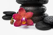 Pile Black Zen Stones And Red Orchid, Phalaenopsis On White Background, Spa Concept, Closeup