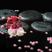 Spa Still Life Of Zen Stones With Drops, Red Orchid Cambria Flower And Pearl Beads On Water, Closeup