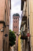 Narrow streets of Lucca with Guinigi tower in background, Tuscany