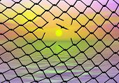 stock photo of bird fence  - Bird escaping from the cage - JPG