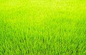 Surface Grass