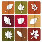 Autumn Leaves Icon. Red, Yellow And Green Leaves Of Forest Trees. Are Used As Buttons For Web Design