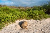 Sea Lion Resting Under The Sun, Galapagos