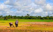 Quintessential Cambodia
