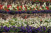 Terraced flowerbeds.