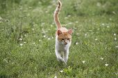 Kitten kitty cat walking on a summer floral lawn