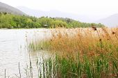 Lake Shore Tegernsee With Reed, Bird Sanctuary