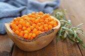 image of sea-buckthorn  - Sea - JPG