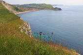 View To Worbarrow Bay, Dorset