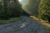 Sunbeam in forest in belogradchik rocks area
