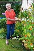 Happy Old Woman Taking Care Her Flower Garden