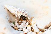 picture of hermit  - Hermit crab walking on beach - JPG