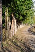 image of row trees  - row of a trees by the roadside - JPG