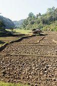 paddy-field ridge,Traditional farming