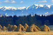 foto of haystacks  - haystack - JPG