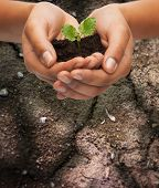 fertility, environment, ecology, agriculture and nature concept - closeup of woman hands holding plant in soil over ground background