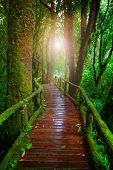 Wood Ways In Mountain Rain Forest Doi Inthanont National Park Chiangmai Northern Of Thailand And Bea