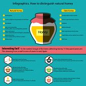 Infographics. How To Distinguish Natural Honey From A Fake