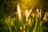 picture of wildflower  - morning sun shining on wildflowers or weeds growing in a grassy field - JPG