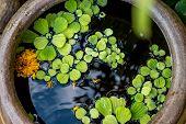 Green Leaves In Water Jar