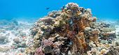 Coral scene with gorgonian coral