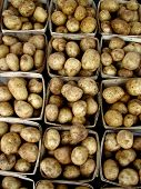 Potatoes 310