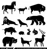 Set of various mammals and rodents: horse, goat, bison, seal, walrus, Arctic bear, bear, wild boar, hedgehog, rabbit, squirrel, wolf, deer,. Vector illustration.