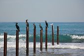 stock photo of significant  - Seabirds are birds that adapt to life in the marine environment - JPG