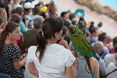 Woman Bird Handler Is Holding Big Parrot On Her Hand.