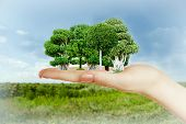 Small forest in hand on nature background