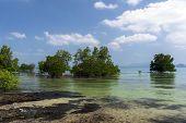 Mangroves Trees