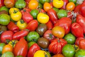 picture of plum tomato  - various types of colourful fresh tomatoes at a street market - JPG