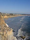 Acantilado de pelícanos en Pismo Beach, CA