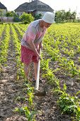 image of hoe  - Poor farmer hoeing vegetable garden in springtime - JPG