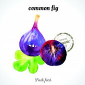 picture of exotic_food  - Watercolor common fig - JPG