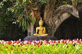 Meditation Buddha Statue In Tulips Garden Under The Bodhi Tree.