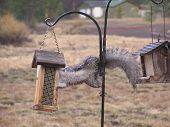 Squirell And The Bird Feeder Phase Two
