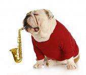 Musical Dog