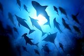 A Variety Of Marine And Ocean Life Silhouettes Under The Waves Including Salt Water Dolphins, Sharks poster