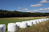 Bales Of Silage On Green Field