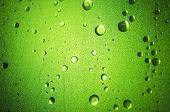 Shower Door - Lime