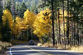 Driving Into Fall Colors. poster