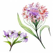 Beautiful Pink And Purple Iberis Flower On A Stem. Floral Set (candytuft Flowers, Leaves, Buds). Iso poster