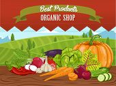 Organic Shop Banner With Vegetable On Wooden Table Illustration. Natural Food, Organic Farming Retai poster