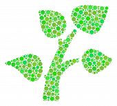 Flora Plant Mosaic Of Circle Elements In Variable Sizes And Green Shades. Vector Filled Circles Are  poster
