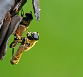 Two Insects Making Love On A Tree