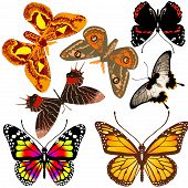 Lot Of Different Butterflies